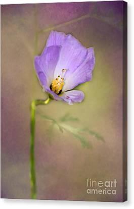 Pretty Purple Flower Canvas Print