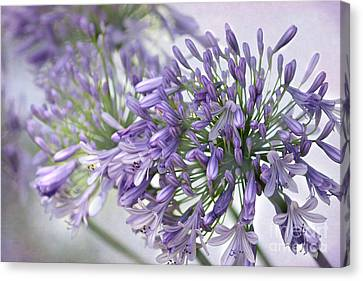 Canvas Print - Pretty Purple Lily Of The Nile by Sabrina L Ryan