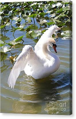 Glassy Wing Canvas Print - Pretty Swan by Carol Groenen