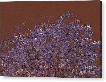 Pretty Tree Canvas Print by Carol Lynch