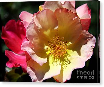 Prettyness Of A Rose Canvas Print