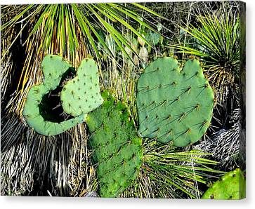 Prickley Hearts Canvas Print by Cindy Croal
