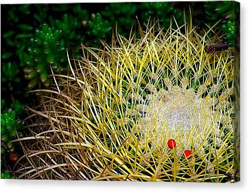 Prickly Canvas Print by Camille Lopez
