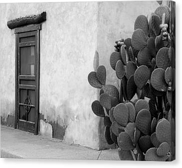 Canvas Print featuring the photograph Prickly Passage by Jim Snyder