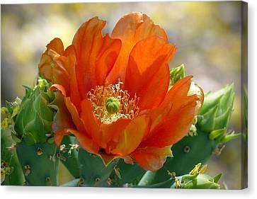 Canvas Print featuring the photograph Prickly Pear Beauty by Cindy McDaniel