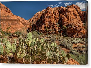St George Day Canvas Print - Prickly Pear Cactus Along Water Canyon by Panoramic Images