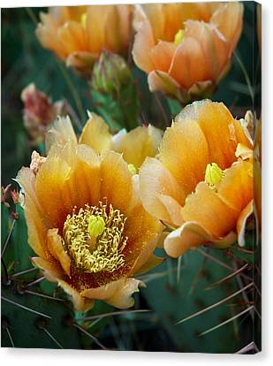 Canvas Print featuring the photograph Prickly Pear Cactus by Mary Lee Dereske