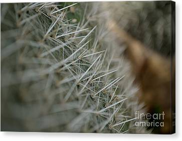 Canvas Print featuring the photograph Prickly Pear by Scott Lyons