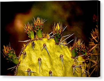 Prickly Pear Spring Canvas Print
