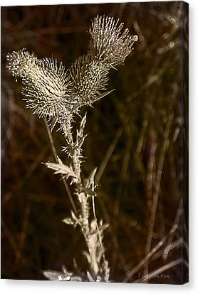 Prickly To The End Canvas Print by Jo-Anne Gazo-McKim