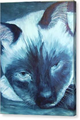 Prima Donna, Cat Canvas Print