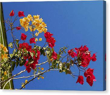 Canvas Print featuring the photograph Primary Colors by Ginny Schmidt