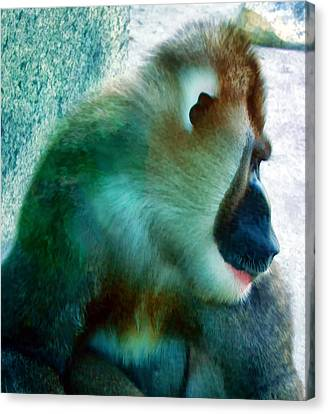 Canvas Print featuring the photograph Primate 1 by Dawn Eshelman