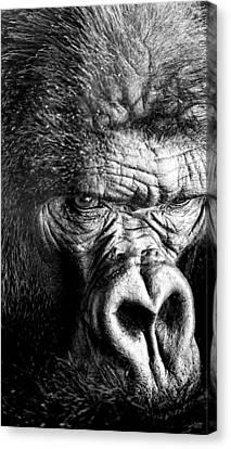 Primate Canvas Print by David Millenheft
