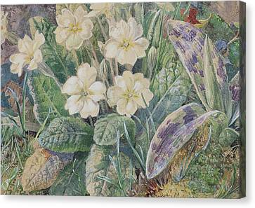 Primrose And Orchid Canvas Print