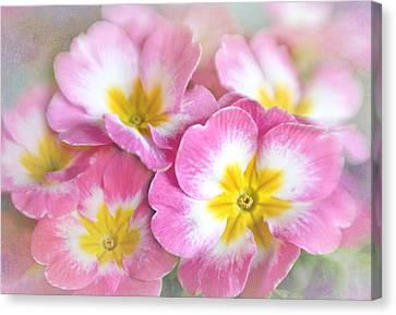 Pink Primroses Canvas Print - Primrose Bouquet by David and Carol Kelly
