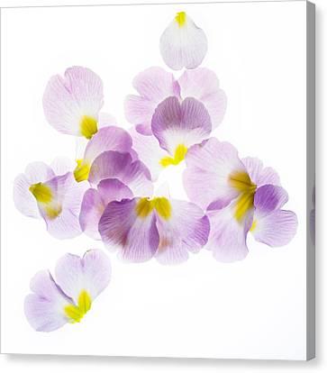 Pink Primroses Canvas Print - Primrose Petals 3 by Rebecca Cozart