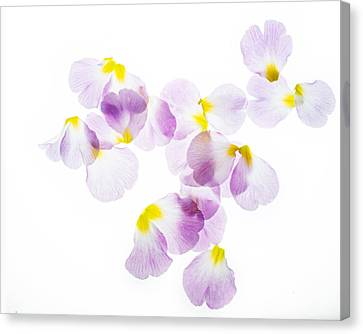 Pink Primroses Canvas Print - Primrose Petals 4 by Rebecca Cozart