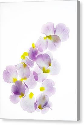 Pink Primroses Canvas Print - Primrose Petals 5 by Rebecca Cozart