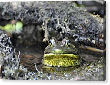 Canvas Print featuring the photograph Bullfrog by Glenn Gordon