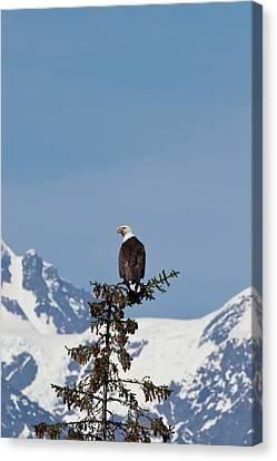 Prince William Sound, Alaska, A Bald Canvas Print by Hugh Rose