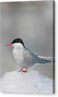 Prince William Sound, Alaska, An Arctic Canvas Print by Hugh Rose