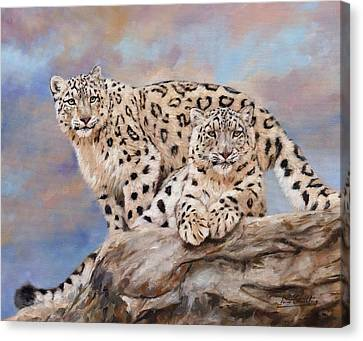 Snow Leopards Canvas Print - Princes Of The Peaks by David Stribbling