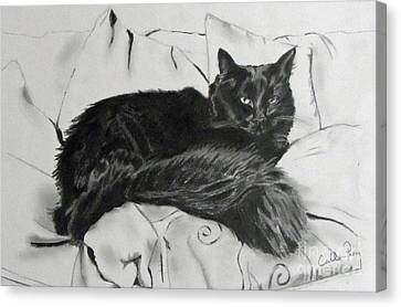 The Cat That Looks Into My Soul Canvas Print by Callan Percy