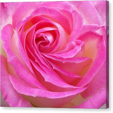Princess Of Monaco Rose 2 Canvas Print