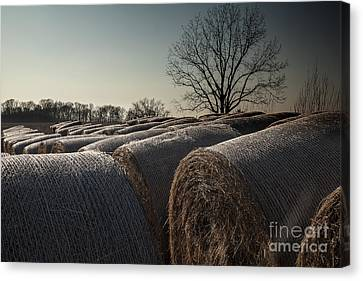 Hay Bales At Dusk Canvas Print by Larry Braun