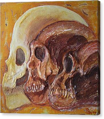 Print Darwinian Study-02-skulls Canvas Print by Pat Bullen-Whatling