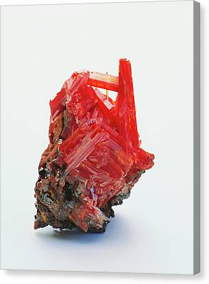 Prismatic Crocoite Crystals Canvas Print by Dorling Kindersley/uig