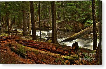Canvas Print featuring the photograph Pristine Forest by Sam Rosen