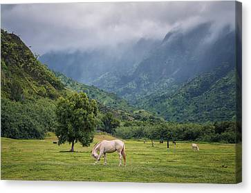 Pristine Pastures  Canvas Print by Hawaii  Fine Art Photography