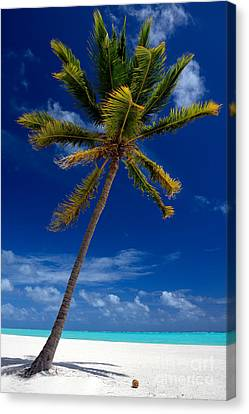 Pristine Tropical Beach  Canvas Print