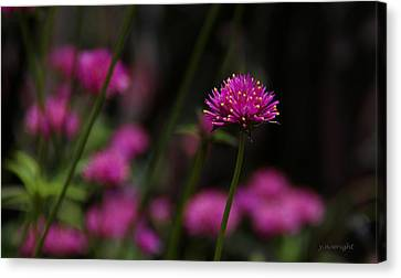 Pretty In Pink Canvas Print by Yvonne Wright