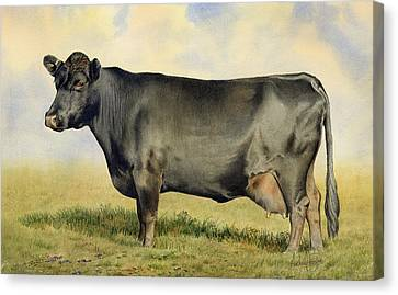 Prize Dexter Cow Canvas Print by Anthony Forster