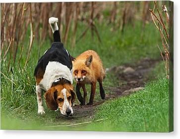 Danger Canvas Print - Probably The World's Worst Hunting Dog by Mircea Costina Photography