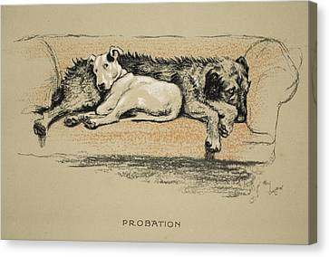 Probation, 1930, 1st Edition Canvas Print by Cecil Charles Windsor Aldin