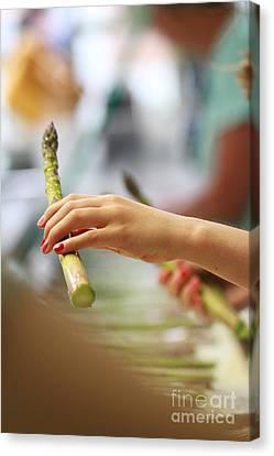 Processing Asparagus Canvas Print by Kelly Jones