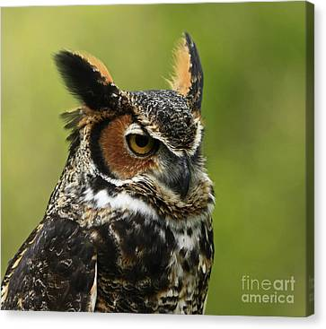 Shelley Myke Canvas Print - Profile Of A Great Horned Owl by Inspired Nature Photography Fine Art Photography