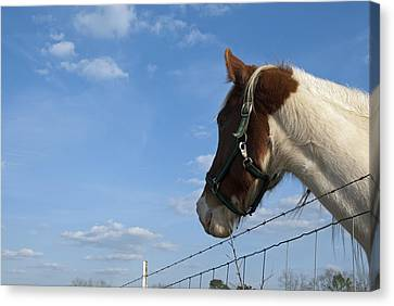 Canvas Print featuring the photograph Profile Of A Horse by Charles Beeler