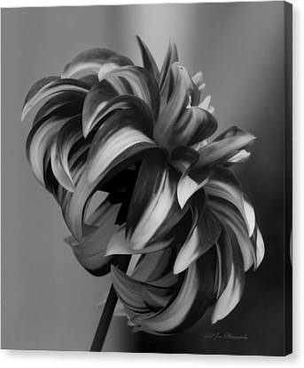 Profile Of Not Santa Two In Black And White Canvas Print by Jeanette C Landstrom