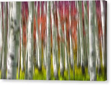 Progression Of Autumn Canvas Print by Adam Romanowicz
