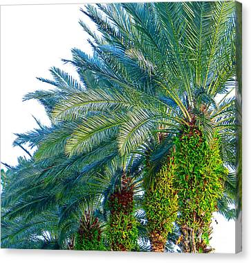 Canvas Print featuring the photograph Progression Of Palms by Joy Hardee