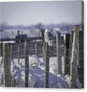 Project Snowstorm Canvas Print