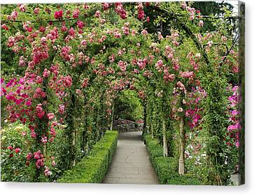 Rose Promenade   Canvas Print