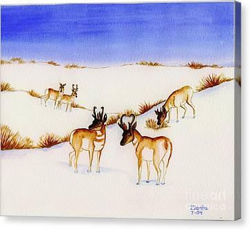 Pronghorn Antelope Canvas Print by Lori Ziemba