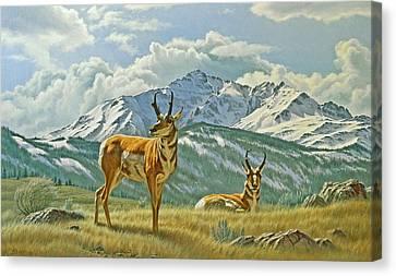 Pronghorn Below Electric Peak Canvas Print by Paul Krapf