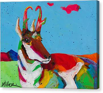 Pronghorn Pretty Canvas Print by Tracy Miller